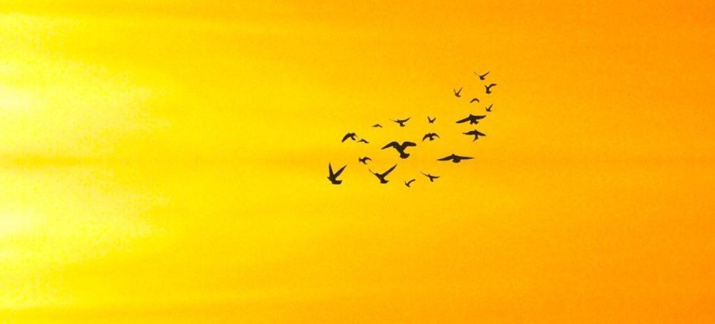 Vögel als Symbol fürs Fliegen